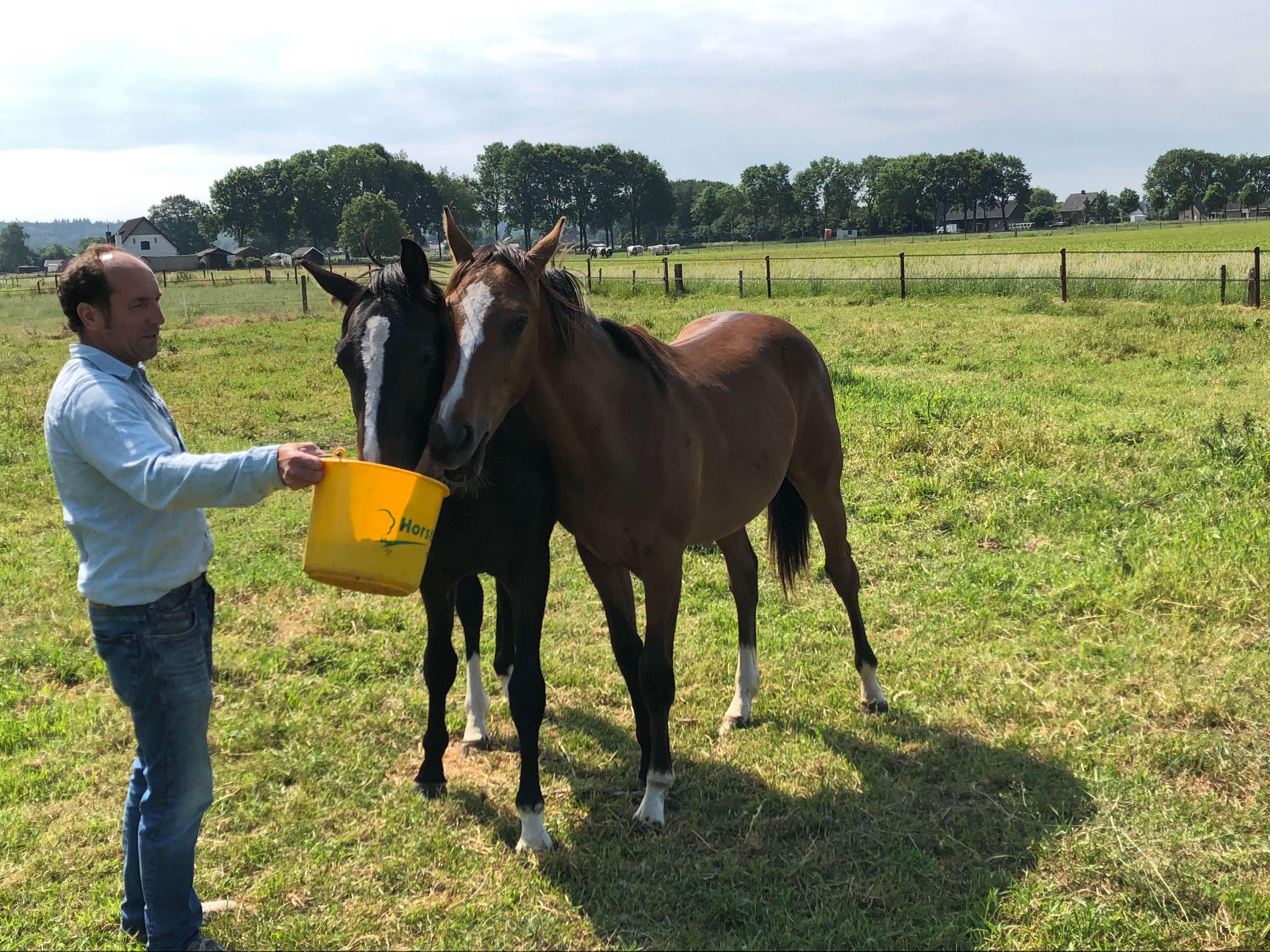 opfok-africhting-jonge-springpaarden